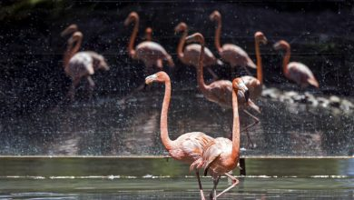 صورة بالصور.. اعتـ ـداء في سماء لبنان على أجمل الطيور في العالم
